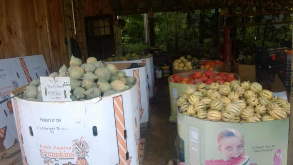 Look at all of these squash from Flying Cloud Farm!