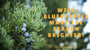 Wild Blueberries Make the season brighter