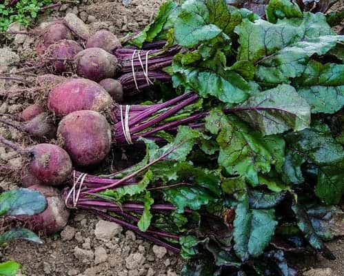Locally grown beets